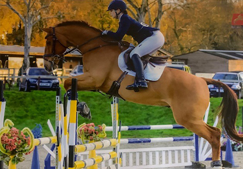 Showjumping Success